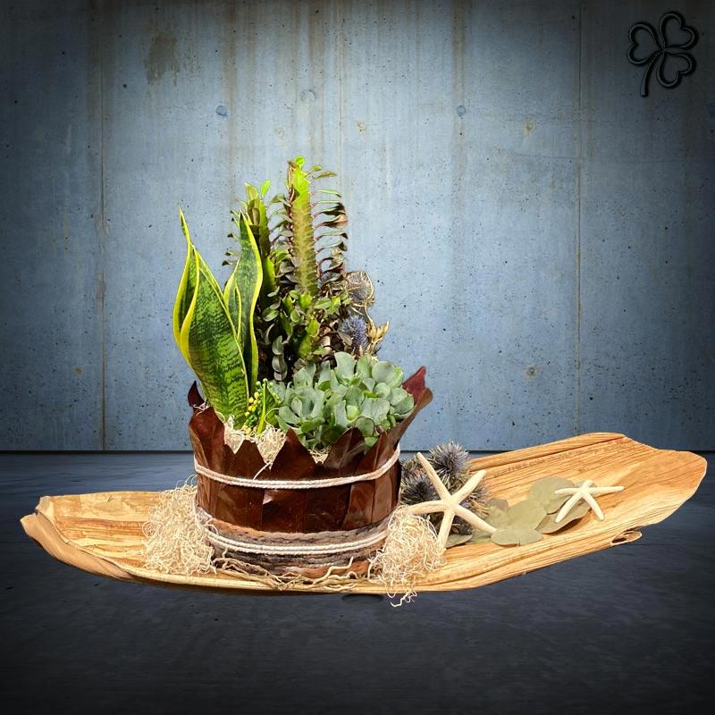 Composizioni floreali di piante grasse - Euphorbia, Sansevieria Trifasciata (detta lingua di suocera), Succulente - su foglia di banano essiccata.