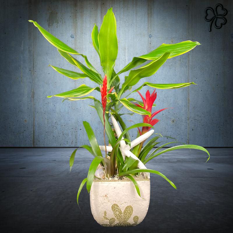 Composizioni floreali di Piante tropicali - Dracena Variegata, Guzmania, Vriesea - in ceramica artigianale stile deserto.