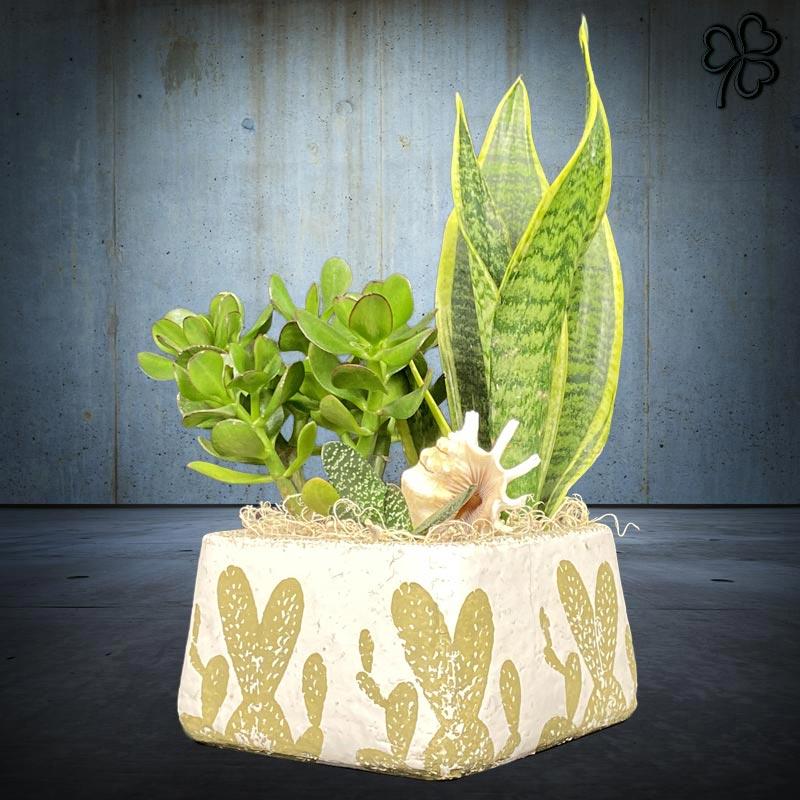 Composizioni floreali di Piante grasse - Crassula, Haworthia, Sansevieria Trifasciata (detta lingua di suocera), in ceramica artigianale stile deserto.