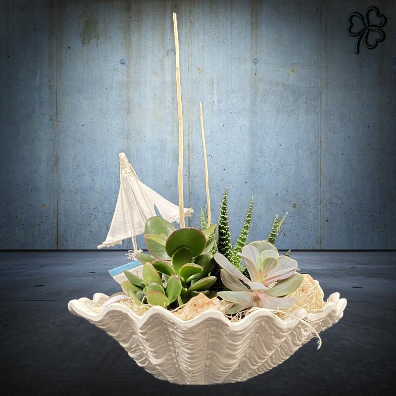 Composizioni floreali di piante grasse - succulente - tile mare in vaso di ceramica italiana a forma di conchiglia