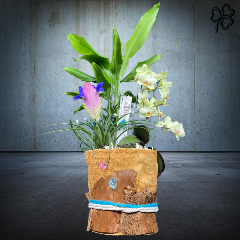 Composizioni floreali di piante tropicali - Dracena Fragrans, Tillandsia Cyanea, Orchidea Phalaenopsis nana.