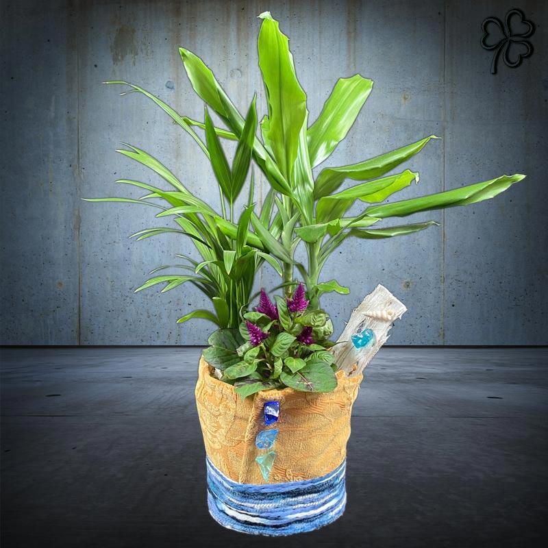 Composizioni floreali di piante tropicali - Dracena Fragrans, Areca, Celosia dai fiori fucsia.