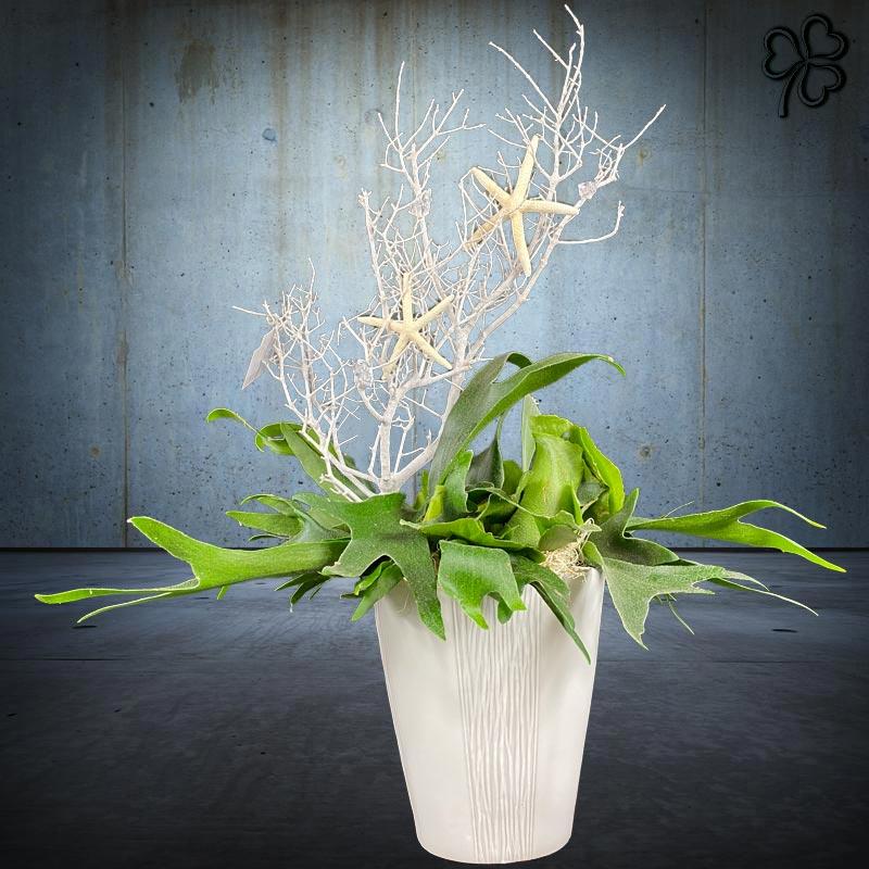 Composizioni floreali di Platycerium (felce preistorica detta Corna D'Alce) in vaso di ceramica bianca italiana.Composizioni floreali di Piante tropicali