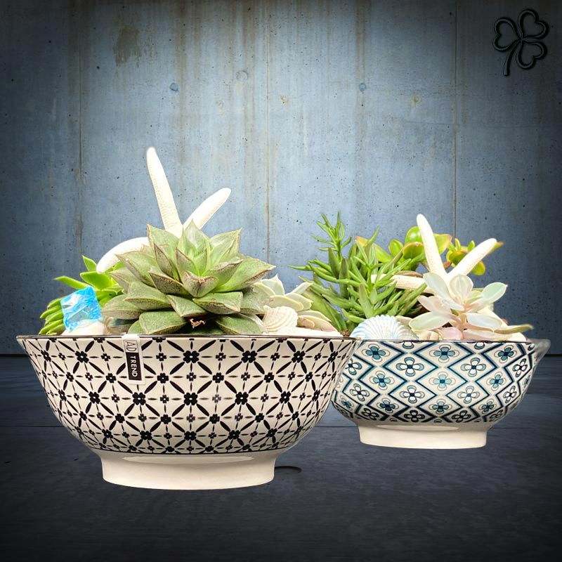 Composizioni floreali di piante grasse in vaso di ceramica fantasia orientale.