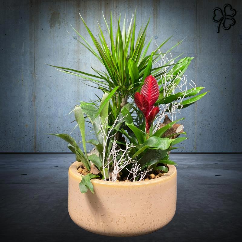 Composizioni floreali di piante da interno in ceramica italiana sabbia.