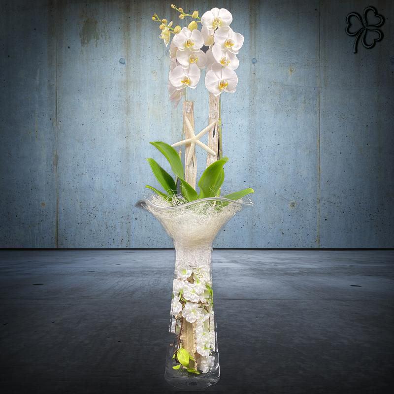 Composizioni floreali di Orchidea Phalaenopsis bianca bi-ramo in vaso alto in vetro