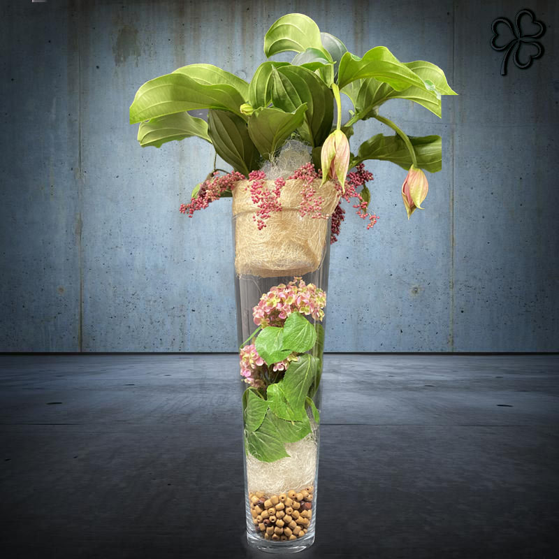 Composizioni floreali di Medinilla Magnifica in vaso in vetro cilindrico