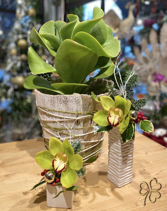 pianta_orchidee