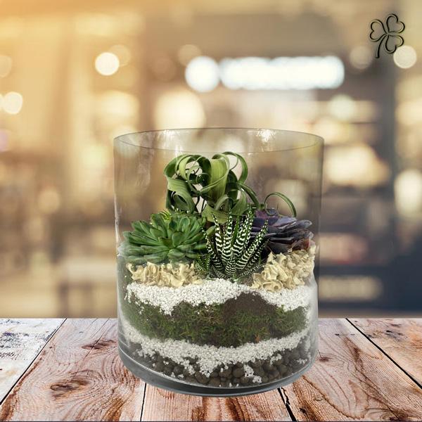 Terrarium mix di piante grasse e tropicali