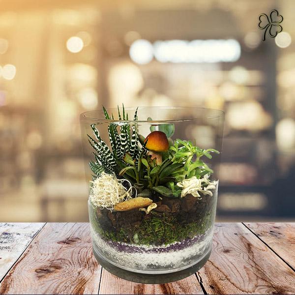 Terrarium mix di piante grasse