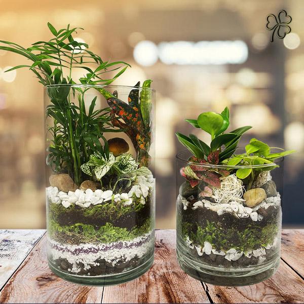 Terrarium mix di piante tropicali